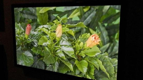 HDR技术会成为电视领域新革命吗?