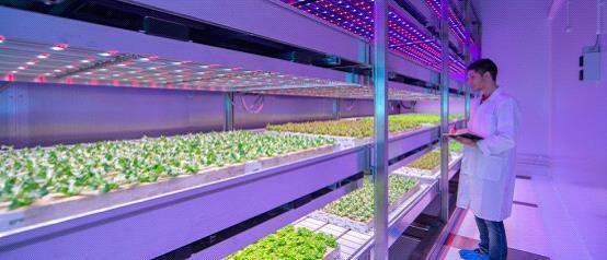 飞利浦研发植物LED光源 可以在室内进行种菜