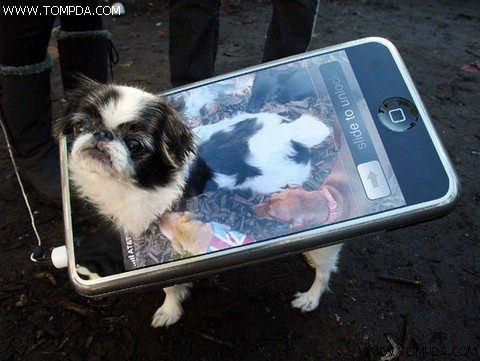 狗狗主人必备五款iPhone手机应用软件