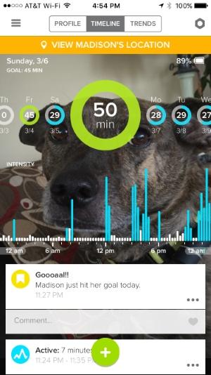 Whistle GPS宠物追踪器体验 市面上的最佳选择