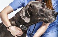 给狗狗带上智能项圈 实现全天候身体健康监测