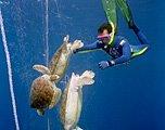 2010海洋环保摄影佳作