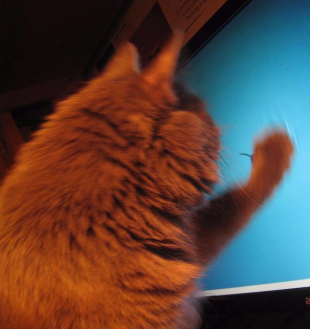 "Linux桌面Xfce曝出严重""Bug""对显示器有物理伤害"