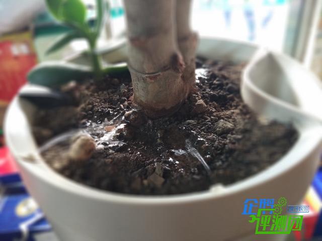 宝贝植物外出死?用Parrot Pot智能花盆让我放心多了