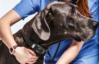 外媒评CES十佳产品:最佳穿戴设备是给狗用的