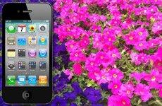 iPhone 4拍照严重偏色