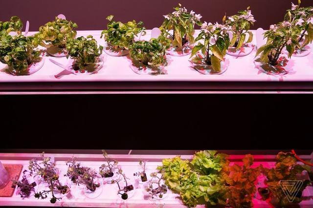 在家建一个迷你花园 想吃点儿啥都可以自己种