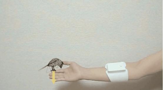 虚拟现实臂带控制器亮相 可创造真实触感