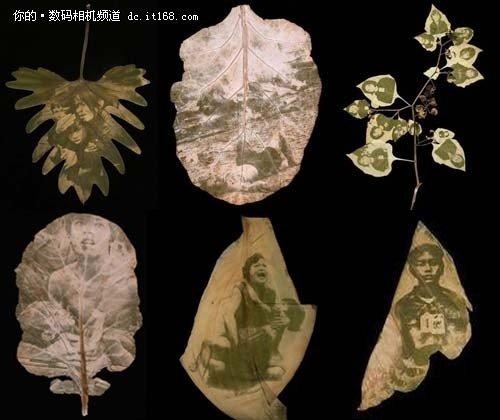 树叶为纸太阳为墨 DIY原生态天然照片