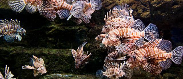 海洋生态保护机器人就长这样 能防止物种入侵?