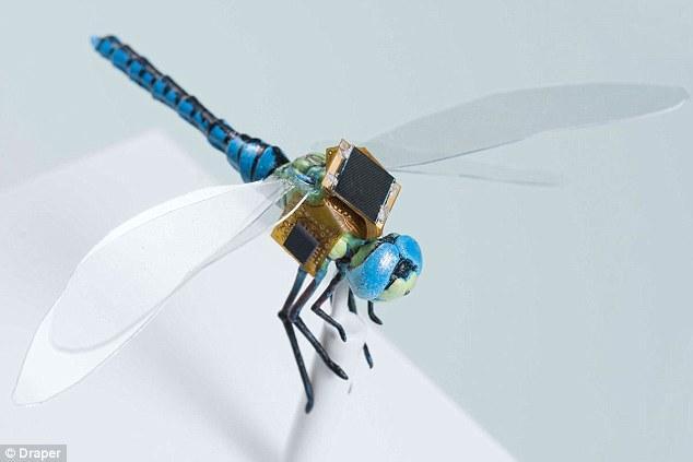 你见过半机械活蜻蜓吗?还能用太阳能供电