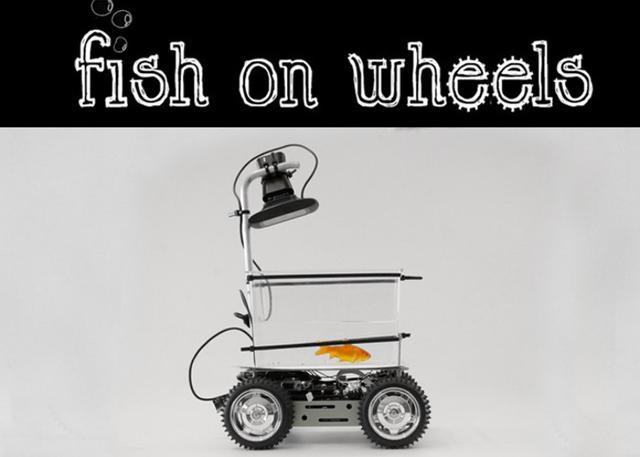 一辆由金鱼驾驶的电动车