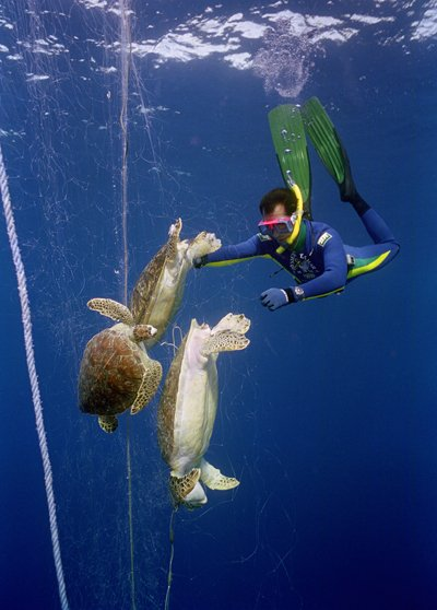 唤醒保护意识 2010海洋环保摄影佳作