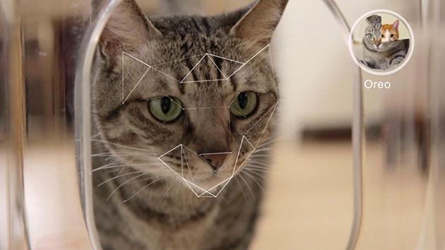 这个智能喂食器具有猫脸识别功能 能喂多只猫