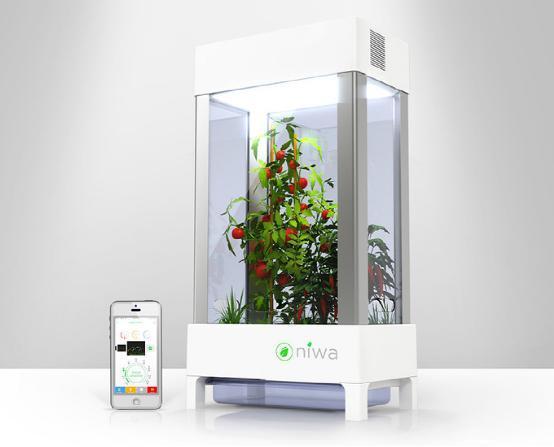 智能盆栽Niwa:可以摆在家中的智能菜园子
