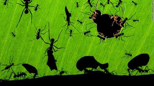 Veolia环境与野生生物摄影奖获奖作品
