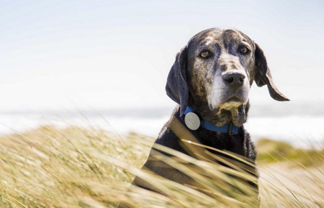15款专为宠物准备的高科技电子设备