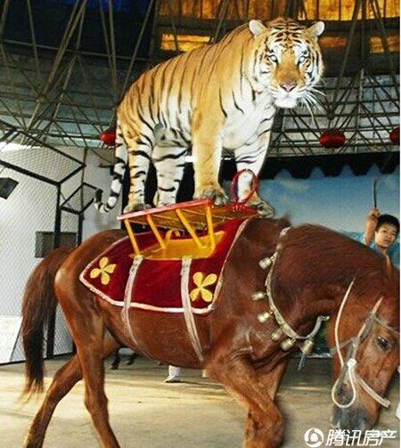 老虎、狮子、狗熊、一个都不能少,最HIGH的杂技表演,惊险够刺激