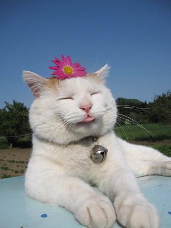 超级可爱大头猫