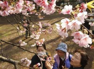 """双语阅读:又逢""""花见会"""" 日本迎来赏樱热潮"""
