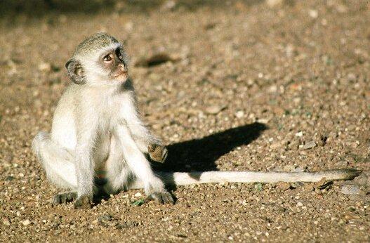 Monkeybusiness图纸猢狲警务南京把戏服务站图片