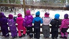 挪威一幼儿园组织孩子看屠宰现场