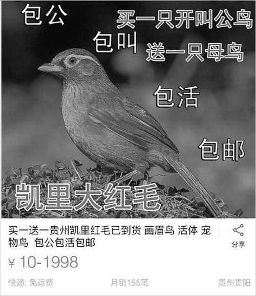 发现有人网上兜售野鸟 高一女生给淘宝写了封信