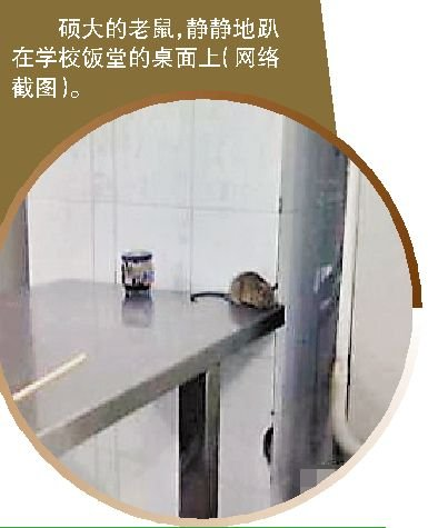 大老鼠 暴走 校园 校方答为集中灭鼠致鼠 暴走
