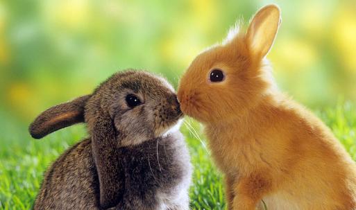 西方文化:英语中的动物暗含什么样的寓意?