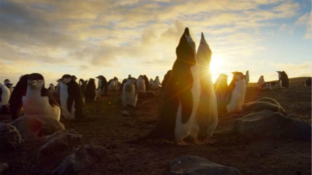 史上最伟大纪录片 BBC憋十年终于出第二季了