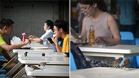 """校食堂被麻雀""""占领"""" 学生很淡定"""