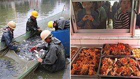 高校捞出3000斤鱼 请师生免费吃
