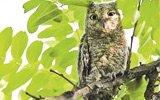 北大生建议设校园自然保护区