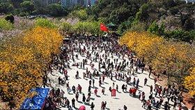 超10万人涌入高校赏花 挤爆校园