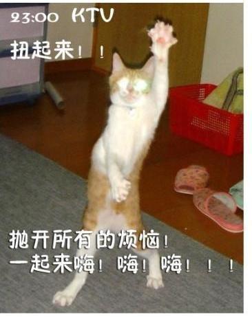 表情搞笑天图演绎上班族的一表情上午好的猫咪包