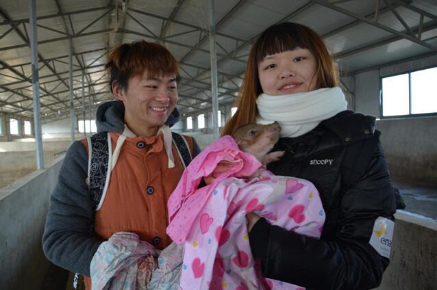 南京工业大学幸福小猪项目