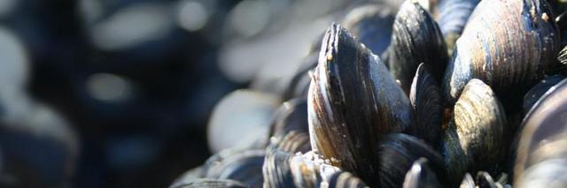 中国:蛎海利民