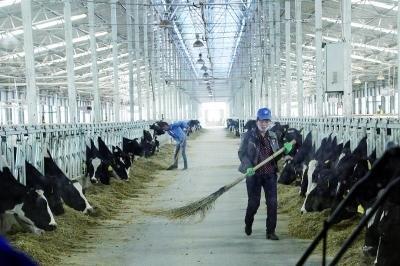 """""""十二五""""北京援藏21.7亿 引进奶牛上高原"""