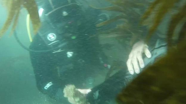 underwater clean-up 清理海底垃圾