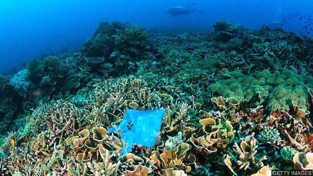 Plastic threatens coral reefs 海洋塑料垃圾威胁珊瑚礁的生存