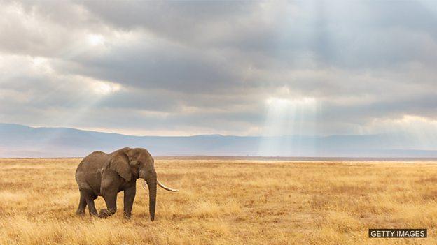 动物的体型可能是决定其灭绝的关键因素