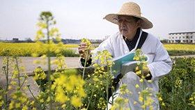 80岁院士仍下田做实验 曾获国际油菜科学界最高奖