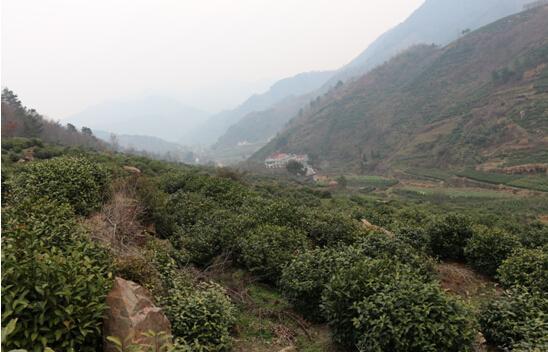 中国科学技术大学:现代茶企