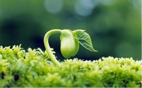 美文欣赏:种苹果+growing
