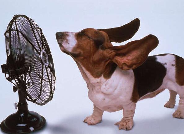 三伏热成狗 英语如何侃天热