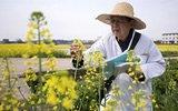 80岁院士仍下油菜田做实验