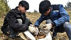 农村学生假期上山采药 双手冻通红