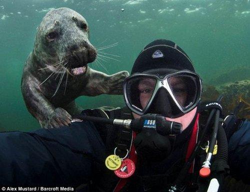 """爱""""抢镜头""""动物:小海豹水下笑 羊驼表情严肃"""