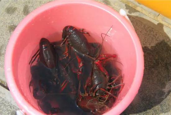 钓钓龙虾吃吃烧烤,顺便还能在这挑自己心仪的房子