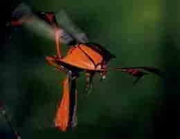 《阿凡达》资料:关于地狱之火大黄蜂